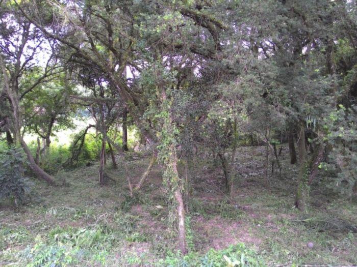 Terreno à Venda - Campo Largo
